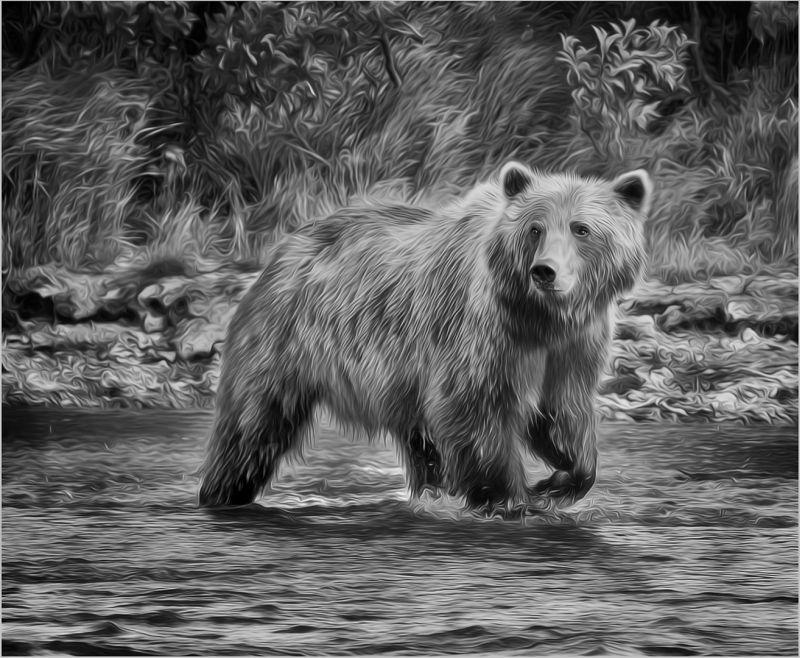 Katmai Brown Bear 2917 Mono, Carder  Nan , Usa