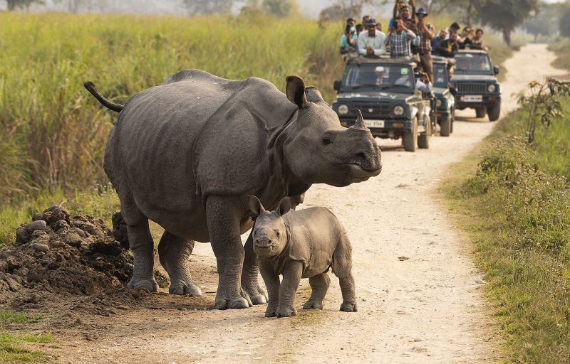 Better Sight Of Rhinos-2, K.m  Narayanaswamy , India