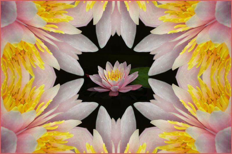 In The Pink, Kramer  Irene , Usa