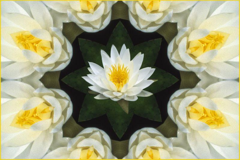 Waterlily Octagon, Kramer  Irene , Usa