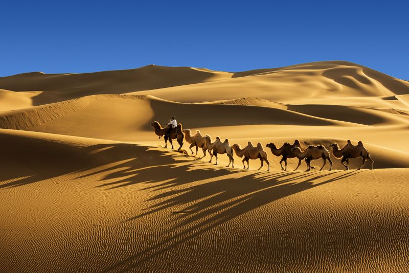 Hak Pun William Wang camel walk