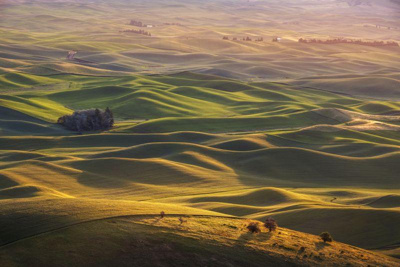 Bob Chiu Wheat fields in Spokane21